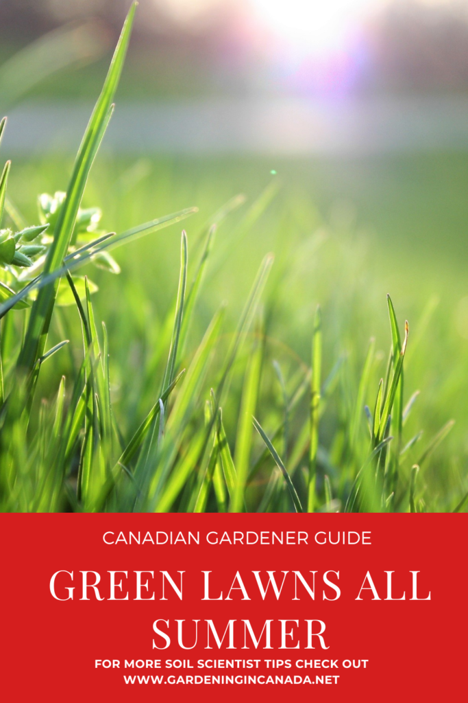 How to have a green lawn all summer in Canada