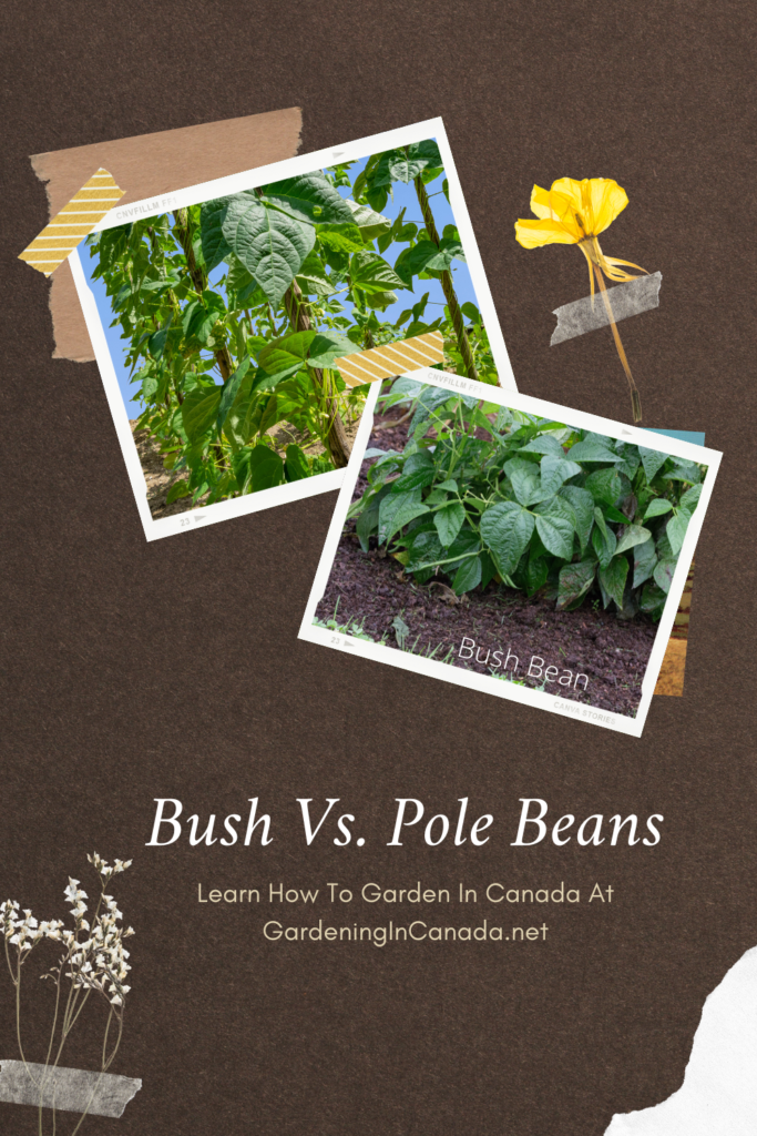Bush Beans VS Pole Beans. Which should you plant in canada?
