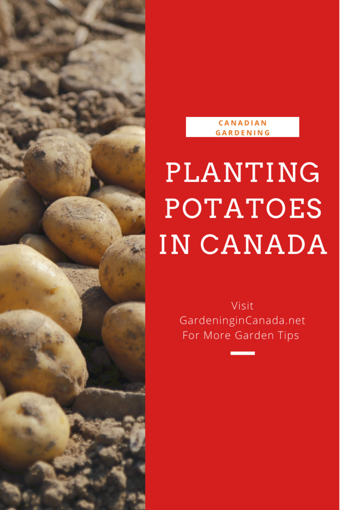 Planting Potatoes In Canada