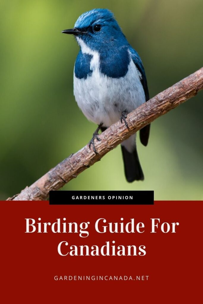 Birding Guide For Canadians