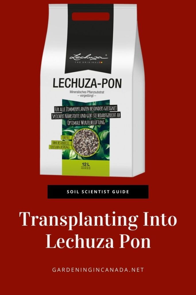 How To Transfer Plants Into Lechuza Pon